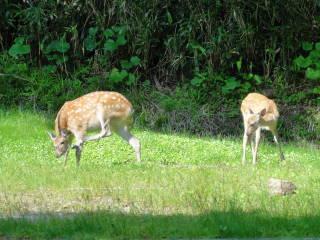 20120825_blog_20120730_Hokkaido_DSC02761_a.JPG