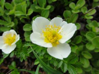20120826_blog_20120731_Hokkaido_DSC03037_a.JPG
