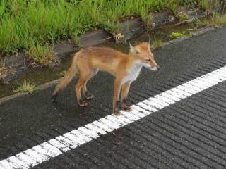 20120902_blog_20120801_Hokkaido_DSC03114_a.JPG