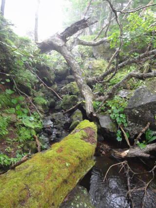20120902_blog_20120801_Hokkaido_DSC03189_a.JPG