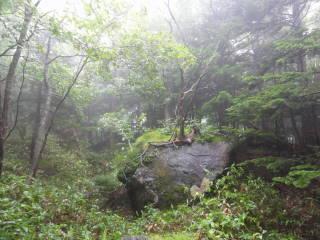20120902_blog_20120801_Hokkaido_DSC03207_a.JPG