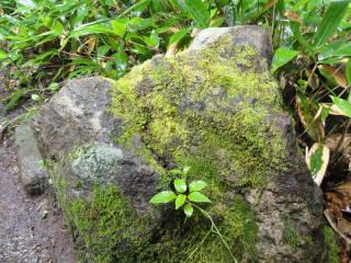 20120902_blog_20120801_Hokkaido_DSC03208_a.JPG