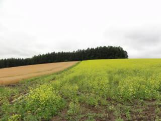 20120923_blog_20120802_Hokkaido_DSC03326_a.JPG