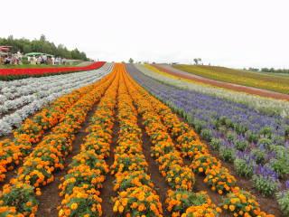 20120923_blog_20120802_Hokkaido_DSC03412_a.JPG
